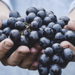 winogrona dostawa poznań
